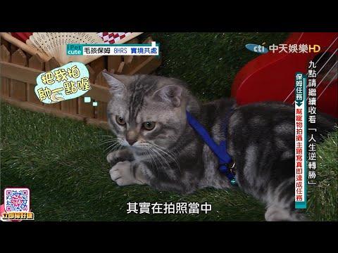 2016.06.26《寵物大聯萌》完整版 保姆挑戰高難度寵物寫真 毛孩表示各種想睡