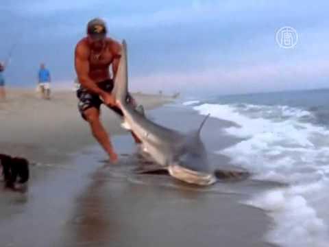 видео как поймать белую акулу