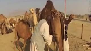 The Journey ,  Umrah / Mecca - Madinah 2017