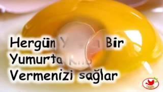Hergün Yenen Bir Yumurta Kilo vermenizi sağlar