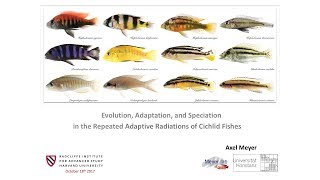 Evolution, Speciation, and Adaptation of Cichlid Fish | Axel Meyer || Radcliffe Institute