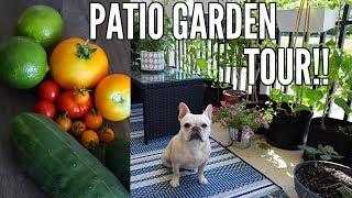 GARDEN TOUR 2018 | Small Space Patio Garden Tour - Growing in Containers!!