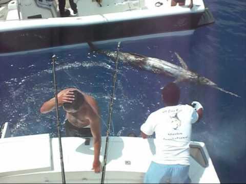 Marlin azul 347 kg Lancha Zoom