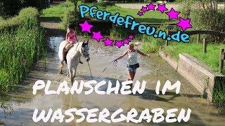 Pony planscht im Wasser [ Pferde Freu.n.de ] Bounty erfrischt sich im Wassergraben