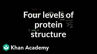 Four levels of protein structure | Chemical processes | MCAT | Khan Academy