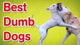 Dumb Dogs | Funny Dog Compilation