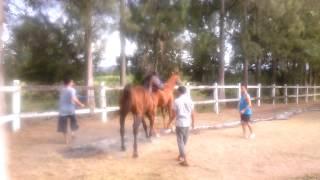 Horse sex mandee lasen the stud