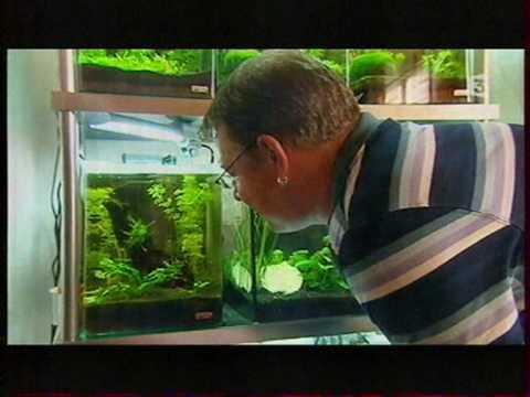 Les nouvelles stars des aquariums