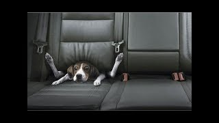Best Car Commercials Ever | Greatest Car Ads All Time | The Used Car Guy