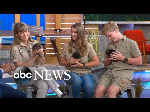 Crikey It s the Irwins on GMA Day with Quilly Nelson and a huge python