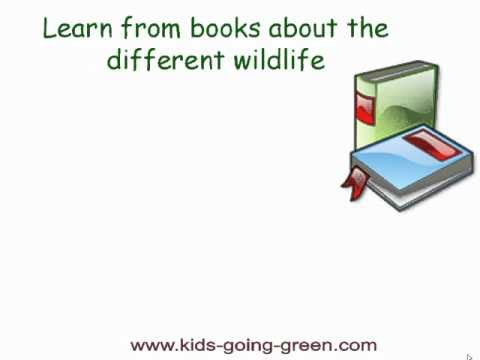 fun outdoor activities for kids - search for wildlife