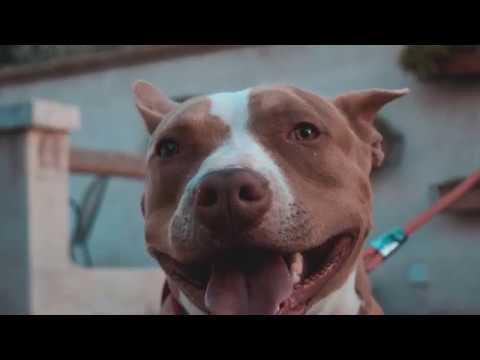 Xxx Mp4 FRAKS RE SOLE Official Video PROD Mxrio Hxxx 3gp Sex