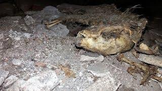 Revealed mystery  of old soil.