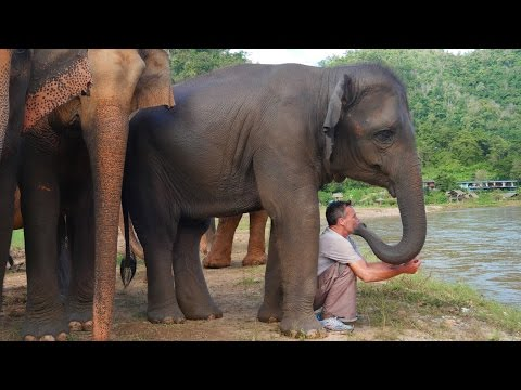 Xxx Mp4 The Elephant Whisperer Man And Elephant Are Best Friends 3gp Sex