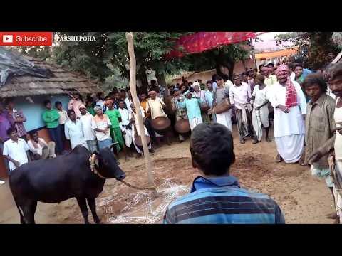 Xxx Mp4 Sohrai Khuntaw 2017 Santali Video 🔥🔥🔥 3gp Sex