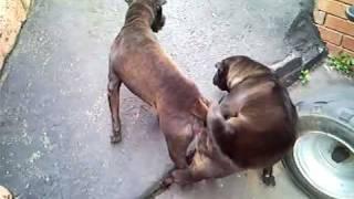 Puppy Love Hurts.mp4