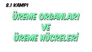 Üreme Organları ve Üreme Hücreleri | 8.1 Kampı