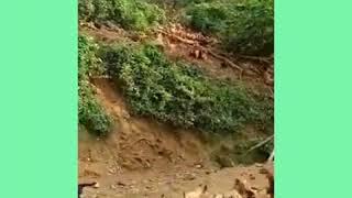 Hen eating amazing video.মুরগীগুলোর অবস্থা দেখলে অবাক না হয়ে পারবেন না । tech pro bd