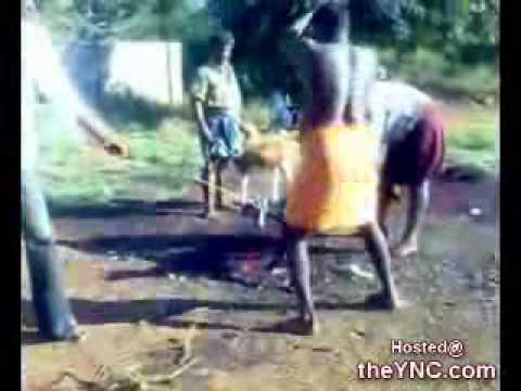 ذبح البهائم بطريقة وحشية في الهند