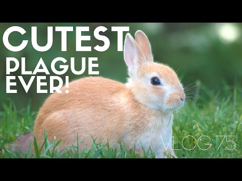 Xxx Mp4 Langley The Island Town With A Cute Bunny Plague And Touring Fort Casey MOTM VLOG 75 3gp Sex