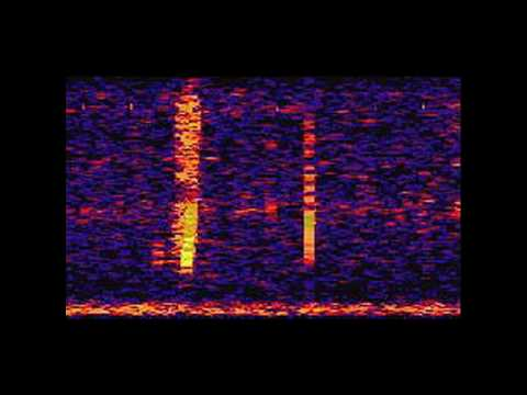 The Bloop: A Mysterious Sound from the Deep Ocean | NOAA SOSUS