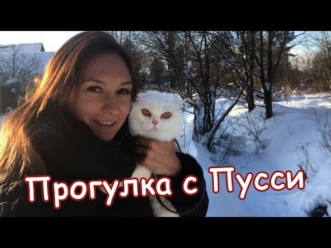 ПУССИ ВПЕРВЫЕ НА ПРОГУЛКЕ / Pussy on a walk for the first time