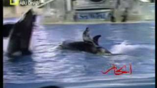 حادث غير متوقع إثناء عروض مع الحيتان