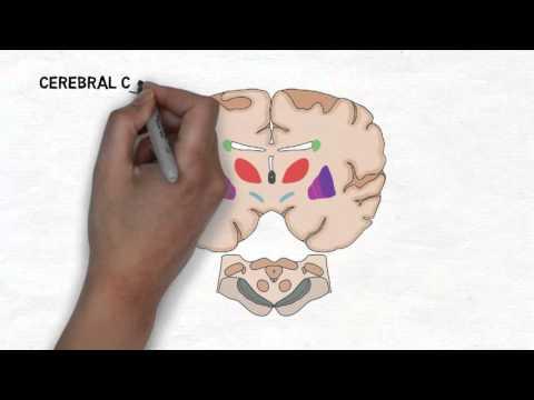 Xxx Mp4 2 Minute Neuroscience Basal Ganglia 3gp Sex