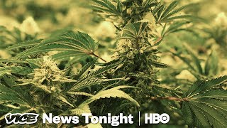 The Black Market For Pot Is Still Thriving In California (HBO)