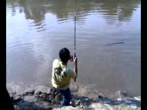 Temoleh kecundang di Sungai Lipis