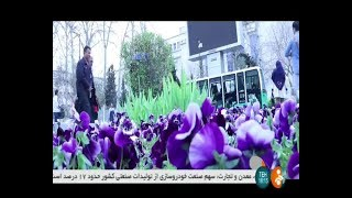 Iran People buying gifts for 1397 Nowrooz New Persian Year خريد شب عيد نوروز مردم تهران ايران