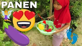 Memetik Sayur Kebun Organik di Halaman Rumah ❤ Botanical Gardening Kids eggplant Lifia Niala