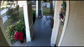 neighbors say dangerous dogs have attacked animals in Riverside Heights