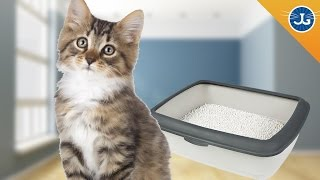 Why Does My Cat Pee Outside The Litter Box?