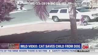 Hero Cat Saves Young Boy From Dog Attack. 13.05.2014