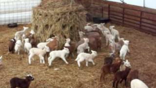 ring around the round bale.mov
