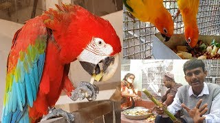 How To Feed Medicines To Birds Parrots Tips / Easy way to give Medicines To Birds.