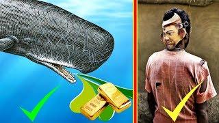 তিমির বমি সোনার চেয়েও বেশি মূল্যবান !!! STRANGE IDEAS THAT WORK BANGLA || #Part 2