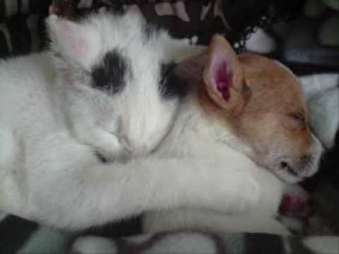 Xxx Mp4 Cats And Dogs 3gp Sex