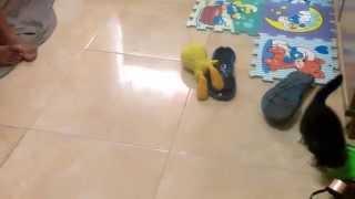 Silvestre y piolin jugando