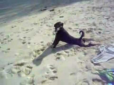 Horny female dog fucking sand in cook islands