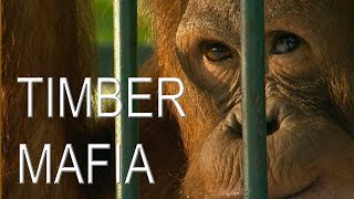 Timber Mafia (2002) | Trailer | Available Now