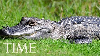 An Alligator Is On Loose In New Jersey & Police Are Warning Residents To Be Careful With Pets | TIME