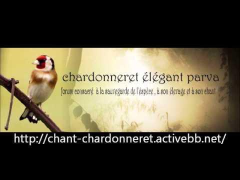 Chant chardonneret crvts
