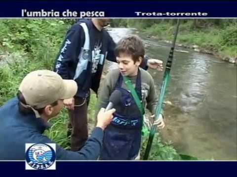 l Umbria che pesca trota torrente agonistico