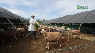 Orge Hydroponique Farm Hope Maroc -  الشعير المستنبت أمل الضيعة المغرب