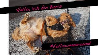 Das erste Hunde FOLLOW ME AROUND   Boris im Hundehotel  