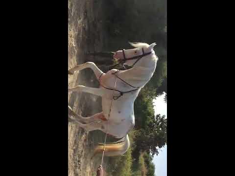 Xxx Mp4 Horse Sex Nagpur Animal Sex 3gp Sex