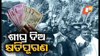 Jagatsinghpur Farmers Launch Protest Demanding Compensation For Crop Loss
