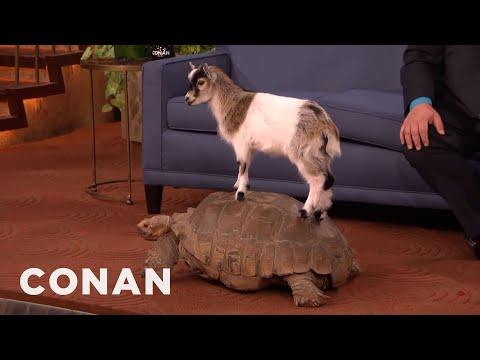 Animal Expert David Mizejewski Capuchin Monkey Caracal Giant Tortoise & Goat CONAN on TBS